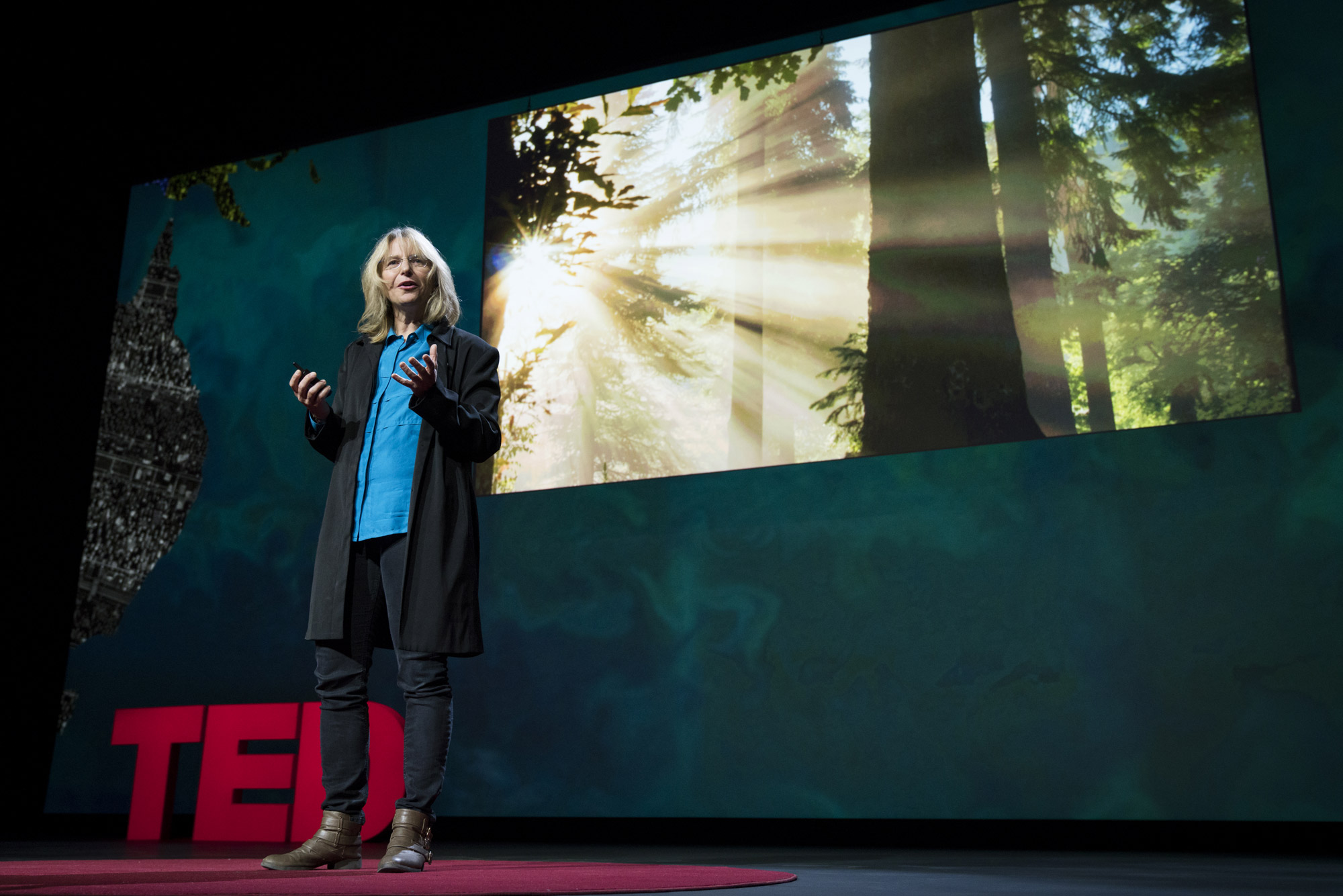 Forest for the trees: Suzanne Simard at TEDSummit | TED Blog